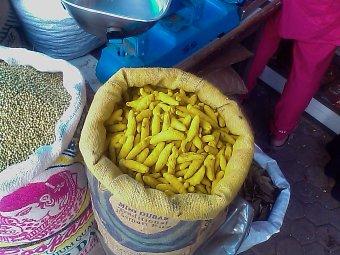 turmeric roots in bag
